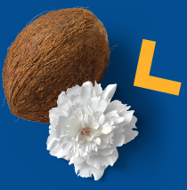 Coconut and flower image